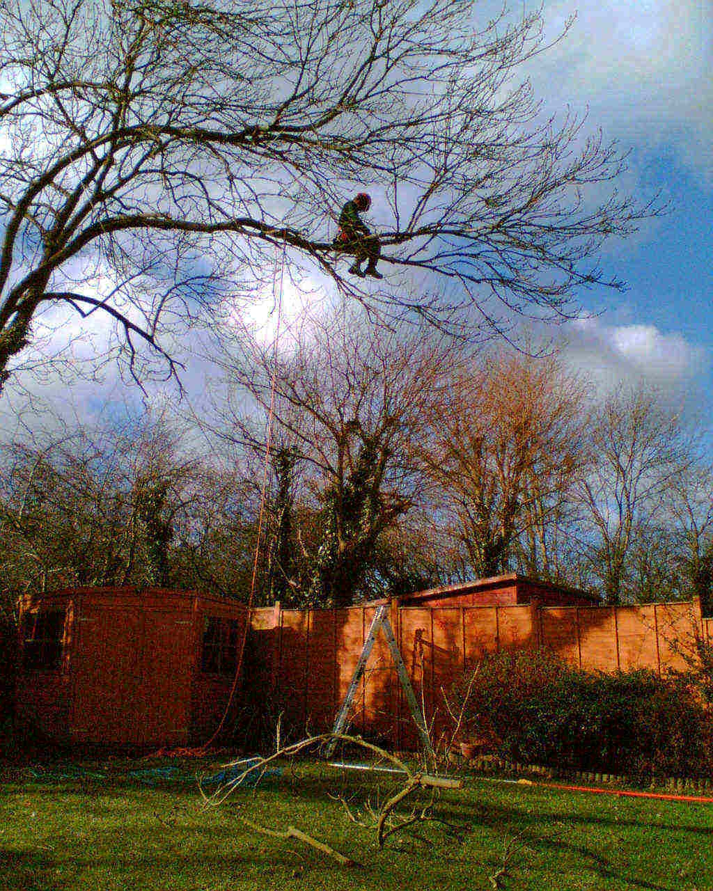 Tree surgeon dealing with obstacles