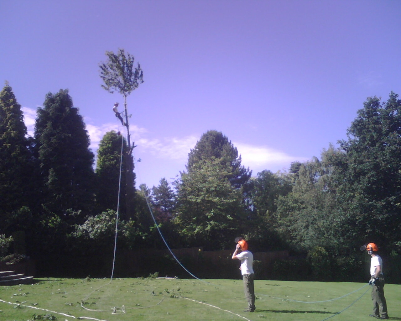 Tree surgery with lowering ropes